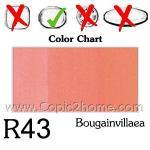 R43 - Bougainvillaea