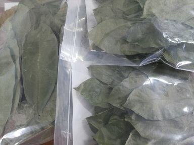 ใบทุเรียนเทศ,ใบทุเรียนนํ้า 50 g (Dried Soursop Leaves)