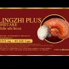 หลินจือ พลัส ชิตาเกะ LINGZHI PLUS SHIITAKE