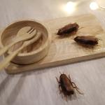 ของเล่น แมลงสาบ อัตโนมัติ