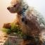 ตุ๊กตาหมีผ้าขนสีน้ำตาลขนาด 20 cm. - Dia thumbnail 5