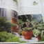 มือใหม่จัดสวนโมเดิร์น (Easy Modern Garden) พิมพ์ครั้งที่ 2 โดย อิศรา แพงศรี thumbnail 3