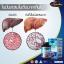 Auswelllife Liver Tonic 35,000 mg ล้างพิษตับ thumbnail 17