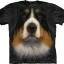 Big-Face Bernese Mountain Dog-T-Shirts thumbnail 1