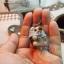 ตุ๊กตาเม่น ( needle felt ) ขนาด 3.5 cm thumbnail 5