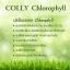 Colly Chlorophyll Fiber Plus คลอลี่ คลอโรฟิลล์ ไฟเบอร์ พลัส (15ซอง/กล่อง) จำนวน 1กล่อง thumbnail 5