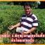 ปุ๋ย อีเขียวนาโน ซุปเปอร์กรีนนาโน แคปซูล thumbnail 8