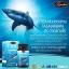 auswelllife pure squalene สควอลีน น้ำมันตับปลาฉลาม thumbnail 8