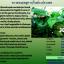 คาวตองแม็กซ์ Kour Tong Max thumbnail 4