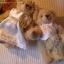 ตุ๊กตาหมี แต่งงาน A ขนาด 20 cm thumbnail 6