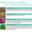 Sena Marine Plankton เซน่า มารีน แพลงตอน thumbnail 3