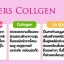 pers collagen thumbnail 16