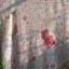 ผ้าพันคอลายหมีน้อยในสวน thumbnail 10
