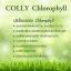 Colly Chlorophyll คอลลี่ คลอโรฟิลล์ thumbnail 4