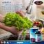 Auswelllife Liver Tonic 35,000 mg ล้างพิษตับ thumbnail 5