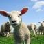 VIP Sheep Placenta 30000 mg thumbnail 6