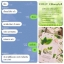 Colly Chlorophyll Fiber Plus คลอลี่ คลอโรฟิลล์ ไฟเบอร์ พลัส (15ซอง/กล่อง) จำนวน 1กล่อง thumbnail 14
