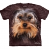 Yorkshire Terrier Face - Youth