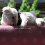 ตุ๊กตาหมีผ้าขนสีขาวขนาด 12.5 cm.- Cake (walk)