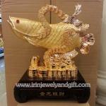 ปลามังกรทองเหรียญจีนs