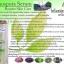 เซรั่มบอระเพ็ด ไทโนสปอร่า เซรั่ม Tinospora Serum thumbnail 6