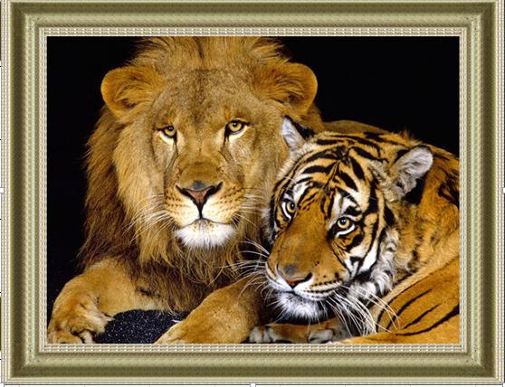 """1918 ภาพ diamond """"สองเสือสิงห์เจ้าป่า"""""""